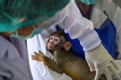 Tailandia entra en la carrera por vacunas contra el coronavirus