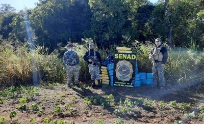 HOY / Reserva Morombí: Senad incautó 1,4 toneladas de marihuana
