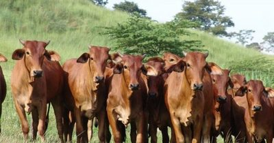 Exportación de carne disminuyó, según la ARP