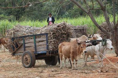 Dictamen a favor para que cañicultores no presenten declaración en contrato con el Estado