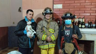 Bomberos rescatan a una gata que estuvo extraviada por dos días