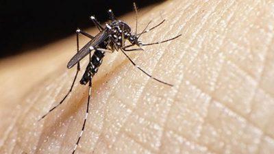 La otra epidemia, aumentan casos de dengue en Paraguay