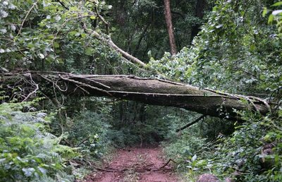 Periodista revela en investigación alarmante cifra de deforestación del Bosque Atlántico en Paraguay