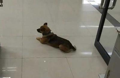 El perro que espera hace tres meses a su dueño que falleció por Covid-19