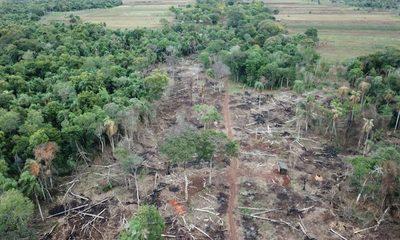 Itaipú solicita colaboración de órganos competentes para frenar daños a bosques nativos