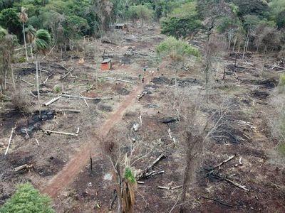 Itaipú pide colaboración para frenar daños a bosques nativos