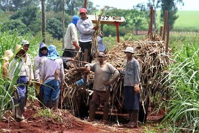 Preocupa a cañicultores de Caaguazú la reducción de precio del producto