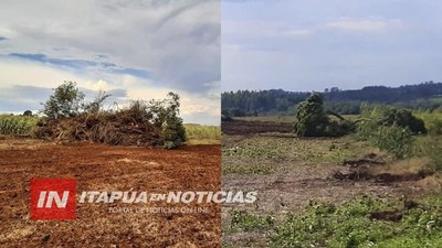 INFONA Y MADES CORROBORAN VOLTEO DE ÁRBOLES NATIVOS EN HOHENAU