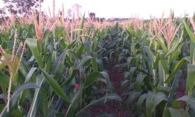 » Agricultura sustentable da esperanzas a productores de San Pedro