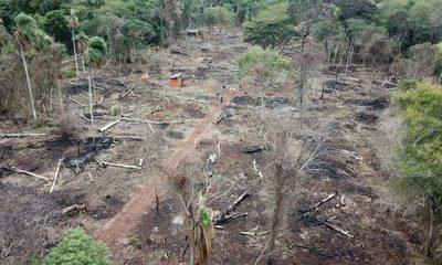 Itaipú pide a Interior que colabore para frenar daños a bosques de sus reservas – Diario TNPRESS