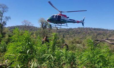 Grupos narcos remiten grandes volúmenes de marihuana a 5 países de la región – Diario TNPRESS