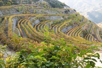 Chipre, la isla del sol y del buen vino