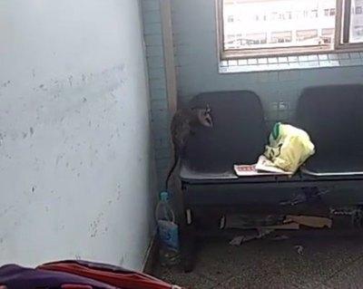 (VIDEO) Moopio nde mykure de visita en el IPS