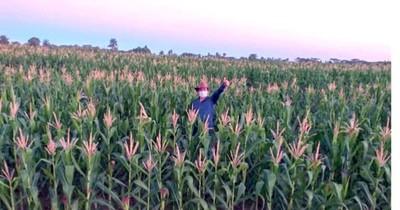 Agricultores logran producción récord de maíz y soja