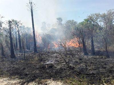 Apicultura amenazada por los incendios forestales
