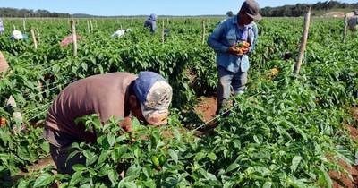 Agricultura crecería en torno al 6% en este año