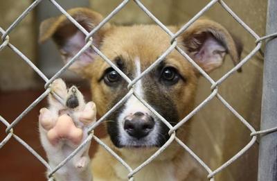 Primera condena: Un hombre es imputado por maltrato animal