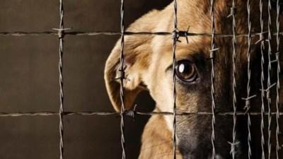 Condenan a hombre que mató a machetazos a un perro