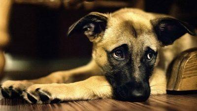 Impulsarán más condenas en casos de maltrato animal