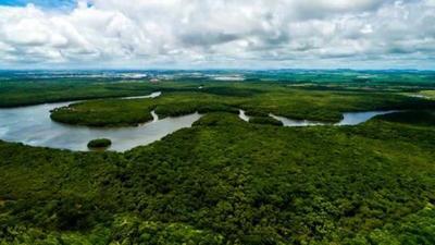 Reino Unido dona 78,3 millones de dólares para proteger Amazonia colombiana