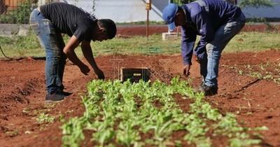 Pobladores de Villa Elisa reciben primera cosecha de huerta municipal