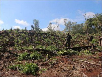 Destruyen 18 hectáreas de marihuana en el Parque Cerro Corá