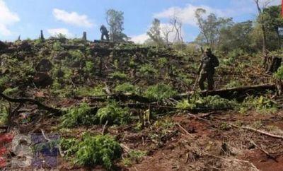 Guardaparques y la FTC destruyeron 18 hectáreas de marihuana en el Parque Nacional Cerro Corá