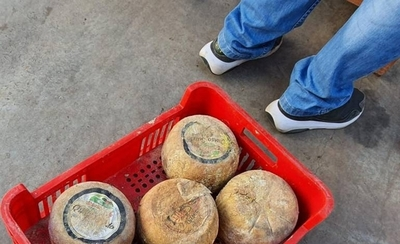 "HOY / Allanan distribuidora de quesos podridos con etiquetas premium ""truchas"""
