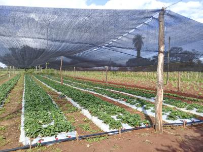 Sistema de riego permitirá a horticultores producir todo el año