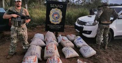 Destruyen más de 9.600 kilos de marihuana en Yby Yaú