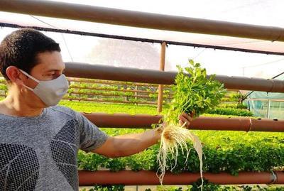Joven apostó al exitoso cultivo hidropónico • Luque Noticias