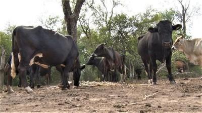 Buscan conformar nueva asociación de productores de todo el Chaco paraguayo