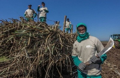 Crédito Agrícola otorgará línea de crédito a cañicultores