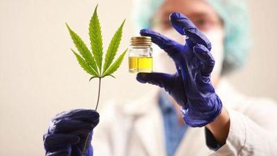Diputados dictaminarán en una semana sobre despenalización del cannabis para uso medicinal – Diario TNPRESS