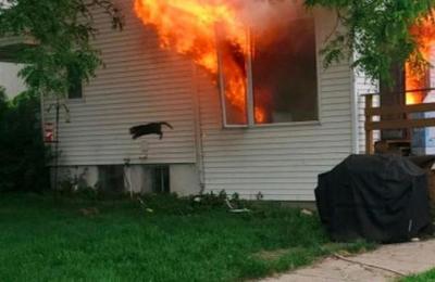 Hombre salva al perro del vecino de un incendio pero olvida al gato: el felino se convirtió en meme