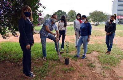 Primera arborización virtual