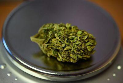 Las ventas de cannabis crecen en Canadá, pero las empresas están en crisis