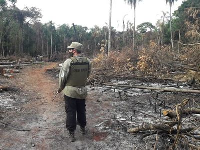 Deforestan 11 hectáreas en la Reserva de Puerto Indio