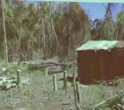 Masiva deforestación en Puerto Indio