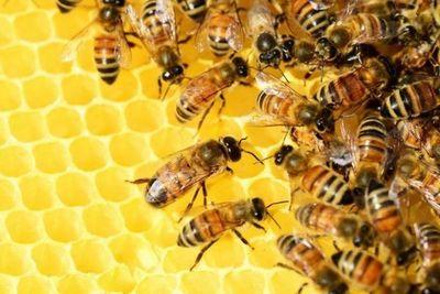 Indígena falleció tras sufrir picaduras de abejas en zona rural de Pedro Juan Caballero