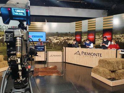 """Piemonte remata el sábado 500 toritos de """"excelente calidad"""" de Estancia Techaga'u"""