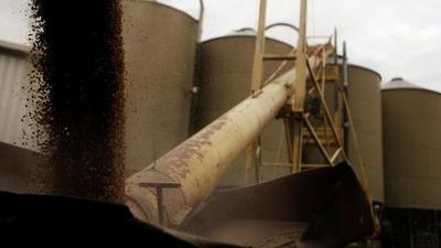 China castiga con aranceles a la cebada de Australia por intentar investigar el virus