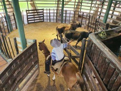 Ventas de ganados de consumo aumentaron 55,9% en la última semana