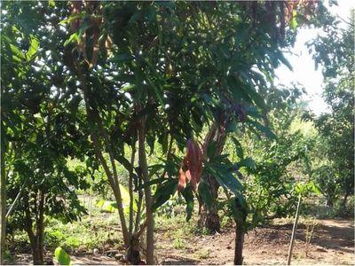 Hallan cadáver de un indígena en Yby Yaú