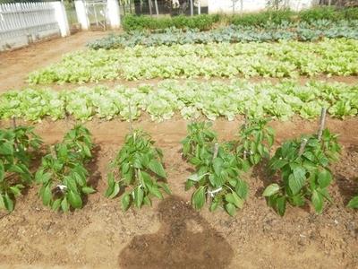 Realizan feria de autoempleo ofreciendo semillas frutihortícolas