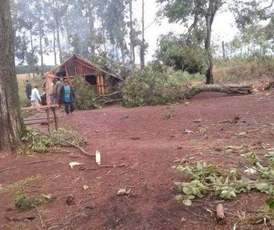 Niña de 5 años murió luego de que un árbol se le cayera encima