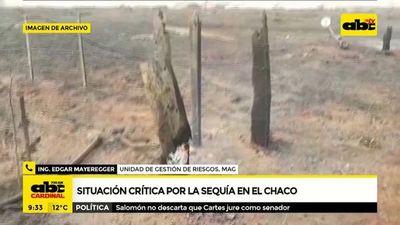 Situación crítica en el Chaco por sequías