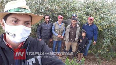 SAN PEDRO DEL PNÁ: EJEMPLAR MANEJO DE ABONOS VERDES PARA RECUPERACIÓN DE SUELO.