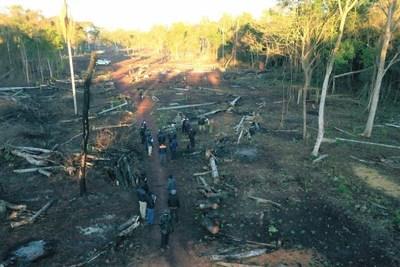 Itaipu inicia reforestación en zona recuperada de Puerto Indio, Alto Paraná
