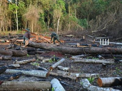 Itaipú recupera 11 hectáreas que estaban siendo depredadas
